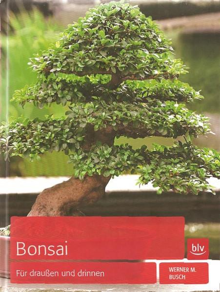 Bonsai für draußen und drinnen